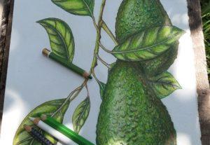 2830Crearé ilustraciones botánicas dibujadas con acuarela o lápiz.